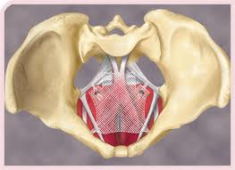 Medical Malpractice Hip Replacement Surgery Update Vaginal Mesh Mdls In Us District Court Cd Amp L
