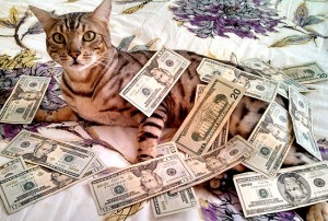 This cat speaks the language investors want to hear.