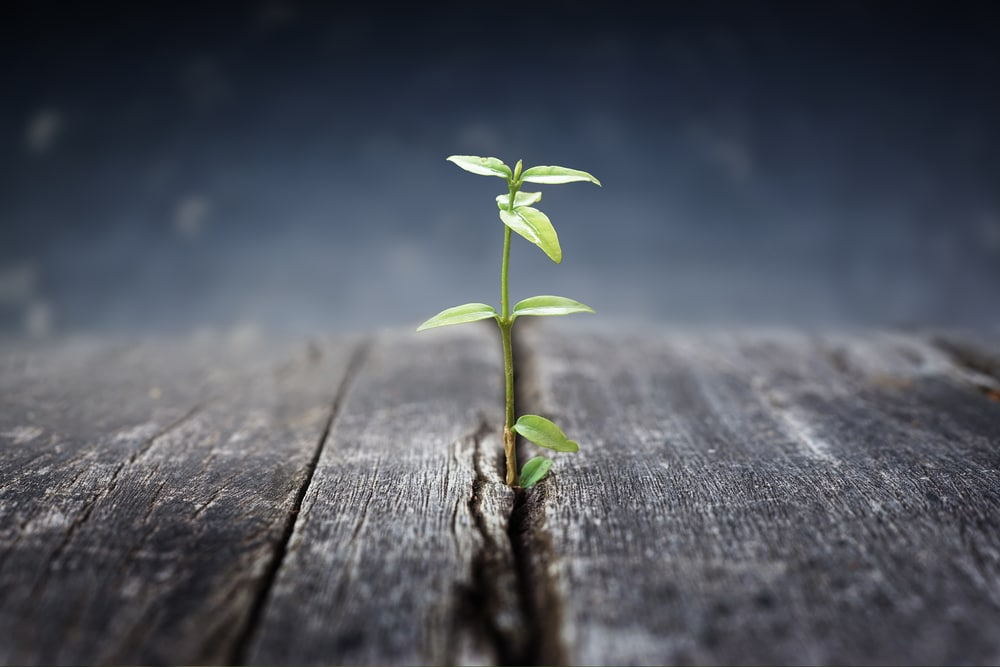 7 Things Every Growing Church Struggles With