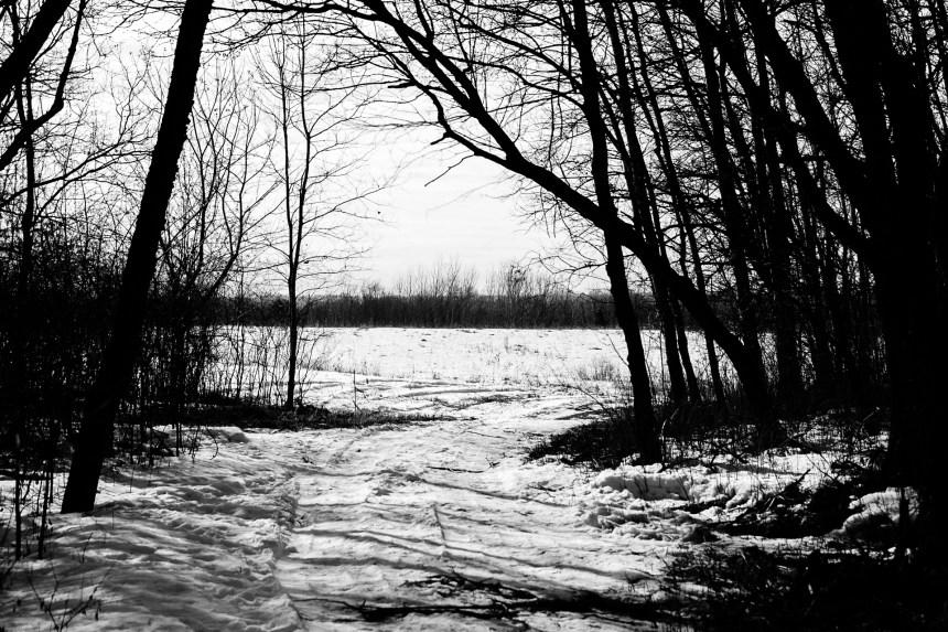 Landscape photo of a trail on Minnesota public land.