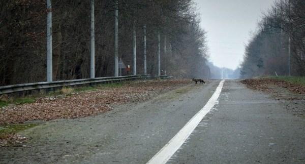 autoroute-abandonnee