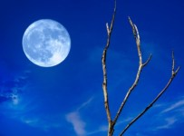 usia bulan