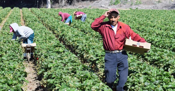 The answer to organized labor's woes? Immigrants.