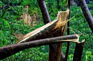 Trees snapped like matches. Photo Credit: Horst Michael Vogel