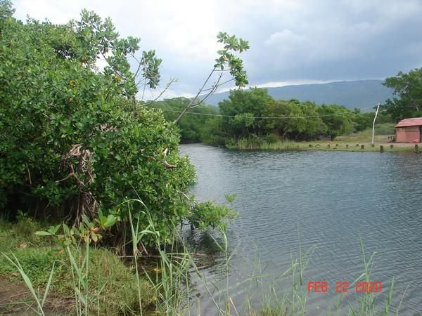 397: Jamaica South Coast – Corona Update