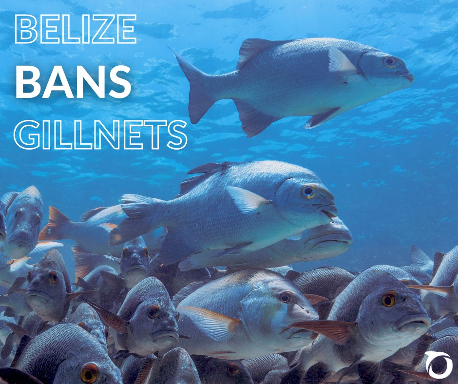 Statutory Instrument Signed into Law to Ban Gill Nets from