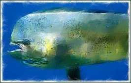 dolphin-fish-ii1
