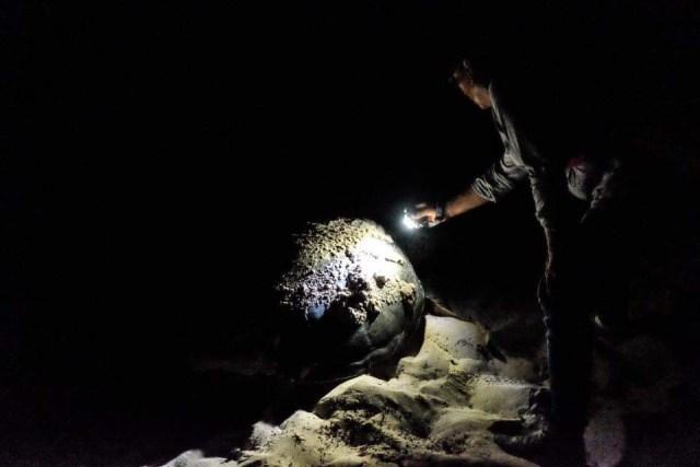 En dos meses se atienden 950 nidos de tortugas en Puerto Morelos