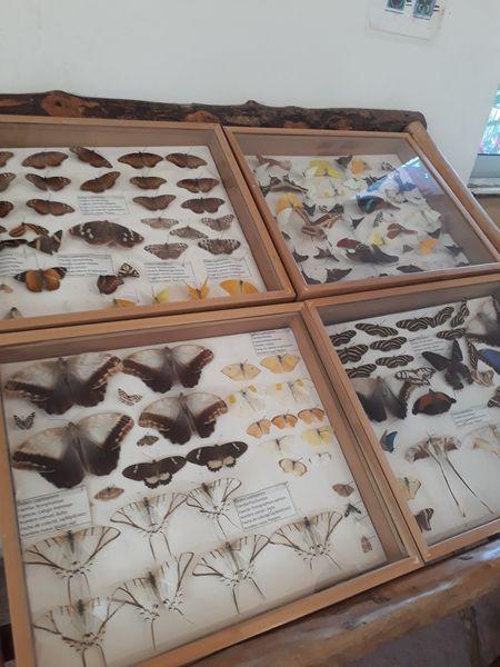 Proyecto de disección de especies locales, nueva opción ecoturística en Lázaro Cárdenas