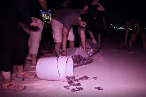 Resguardan en Cancún 3 mil 120 nidos de tortugas
