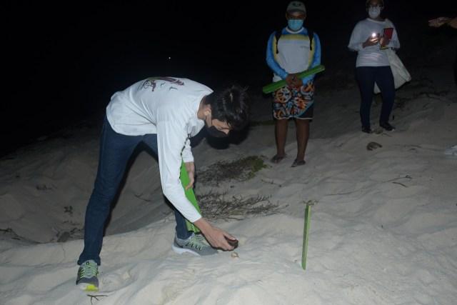 Continúan llegando a desovar tortugas marinas a Cozumel