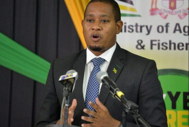 """Calculan en 300 millones de dólares pérdidas agropecuarias en Jamaica por paso de """"Grace"""""""