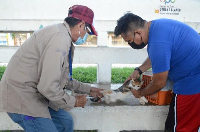 Vacunarán a 170 mil mascotas en Quintana Roo.
