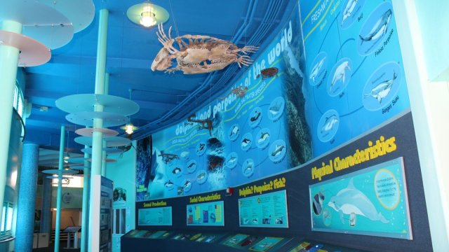 Operará The Dolphin Company el Miami Seaquarium