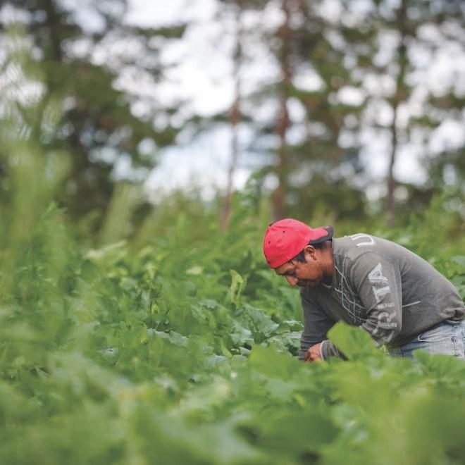 travailleurs agricoles saisonnier