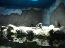 Aquário ubatuba (3)