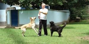 Spa de cão e gato