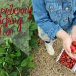 Strawberry Picking Day
