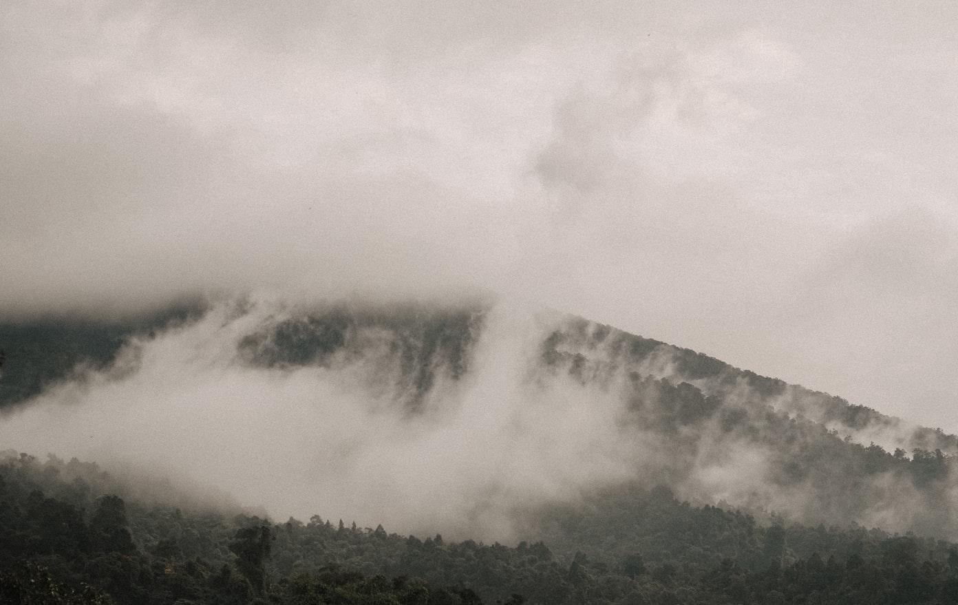 Wisata Geoforest Watupayung Gunungkidul