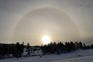 Winter in Coldstream, BC