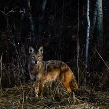 In the Shadows I - Spallumcheen, BC