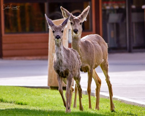 On the run at Round Lake Treatment Centre, Armstrong, BC