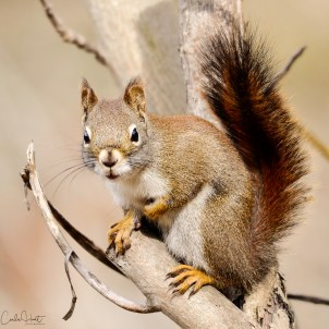 Cuteness Alert! Squirrel, Commonage, Vernon, BC