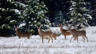 Winter in Whitevale, BC