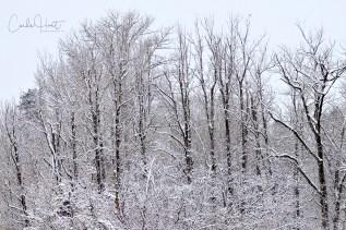Winter, Coldstream, BC