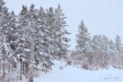 Winter Solstice, Coldstream, BC