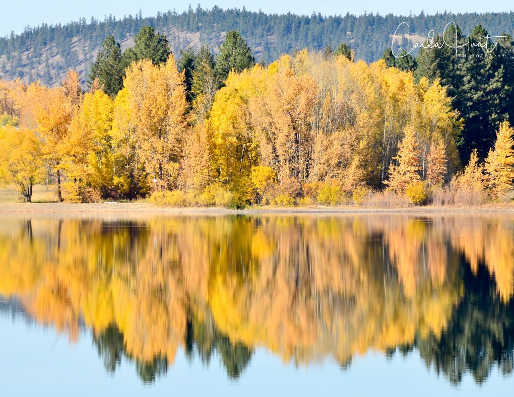 Fall Colours on Monte Lake, BC, Canada