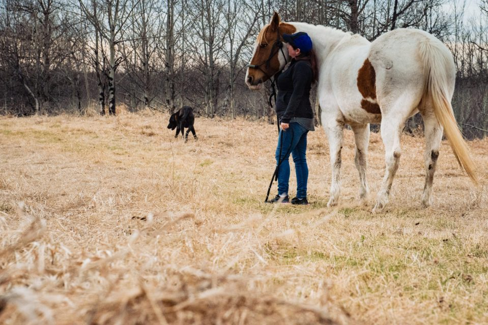 horse, dog and human, enjoying the spring finding peace with horses carla lehman photography equine photographer