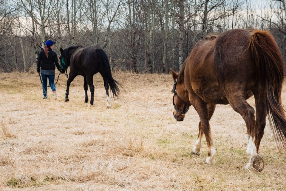 horses and owners walking finding peace with horses carla lehman photography equine photographer