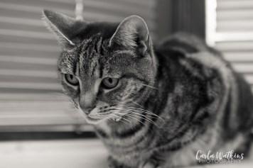 Princess   pet photography by Carla Watkins Photography   carlawatkinsphotography.com