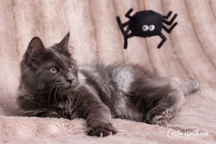 Captain Floof | pet photography by Carla Watkins Photography | carlawatkinsphotography.com