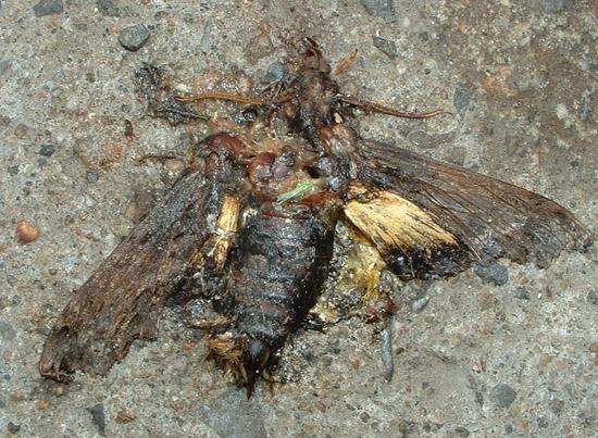 L'environnementale énigme du Sphinx d'Abbott