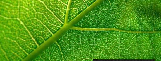 Ouverture de mon photoblogue : photo|synthèse