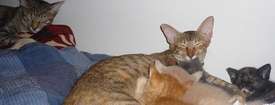 L'Histoire de nos chats
