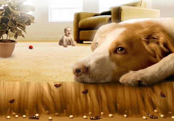 cachet puce pour chien