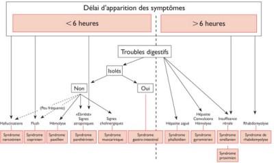 Lorsque le délai d'apparition des symptômes est de plus de 6heures, il faut craindre une intoxication plus importante, voire mortelle. Les syndromes qui ont une longue période d'incubation sont: phalloïdien, gyromitrien et orellanien.