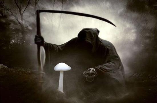 Funestement surnommé Ange de la mort, ce nom décrivant les amanites blanches fait d'emblée office d'un panneau d'avertissement affirmant «Mangez-moi et vous allez mourir!». Et, d'ailleurs, cette image résumerait assez bien les membres du genre Amanita en général.