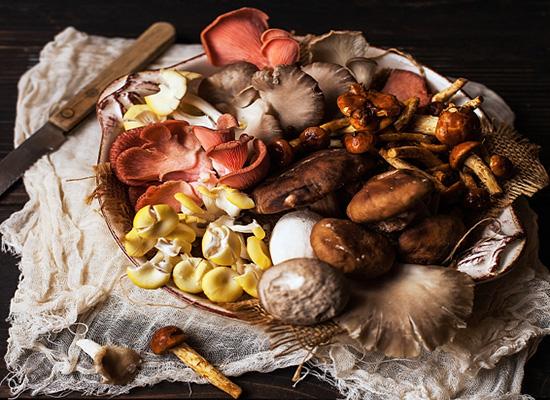 les 10 champignons comestibles par excellence