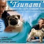 tsunami pirata