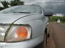 Far del cotxe fixat amb tecnologia pigmea-catalana: amb herbes del bosc i la resina d'uns taps de les orelles