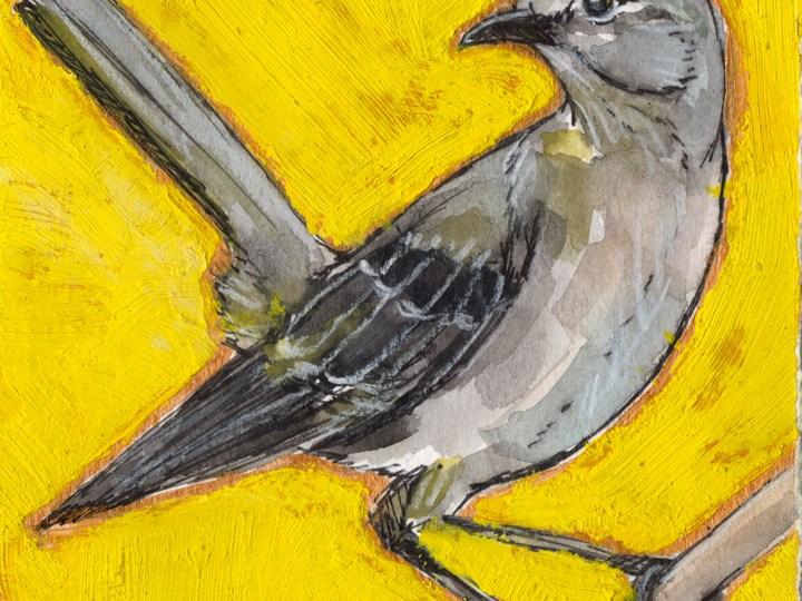Bird Flashcards: Mockingbird