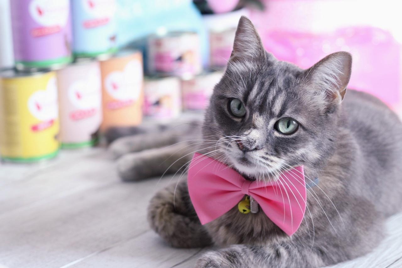 Produits contre les problèmes de diabète chez le chat sur zooplus.