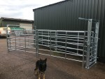 Side View of Cattle Handling System
