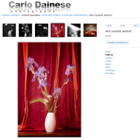 [Fine art]: Composizione di Iris, Margherite, Orzo
