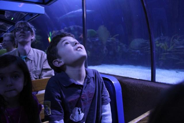 Ride the train at the Houston Downtown Aquarium Carltonaut's Travel Tips
