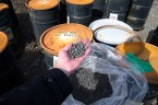 Drums of pea-sized boron carbide balls used as an emergency reactor shutdown measure at B Reactor